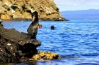 海鳥が多く生息するサンタクルス島近郊のピンソン島。