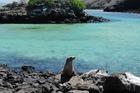 サンタクルス島からボートで15分のピンソン島。アシカ鑑賞ができます。
