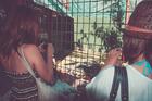 島内にあるマインランドメラネシアへ大きなワニを見に行こう
