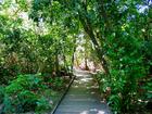散策が楽しくなる木陰の遊歩道