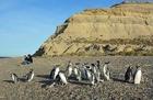 マゼランペンギンを間近で見るチャンス