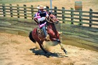 エスタンシアならではの乗馬体験