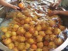 岡山のフルーツを使用した果実酒の製造