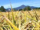 こだわりの北海道産米、酒の旨味を作り出します。