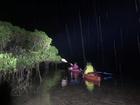 夜の神秘的なマングローブの中を、カヌーで散策します。