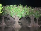夜のマングローブを巡って気分は探検家!夜行性動物を探してみましょう。