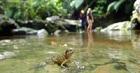 ジャングル探検しながら、西表島の動植物を観察。