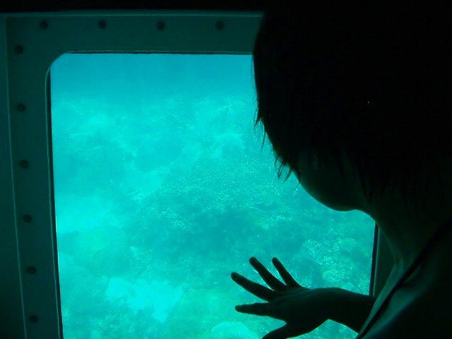 半潜水艦の窓から間近に見える珊瑚や魚