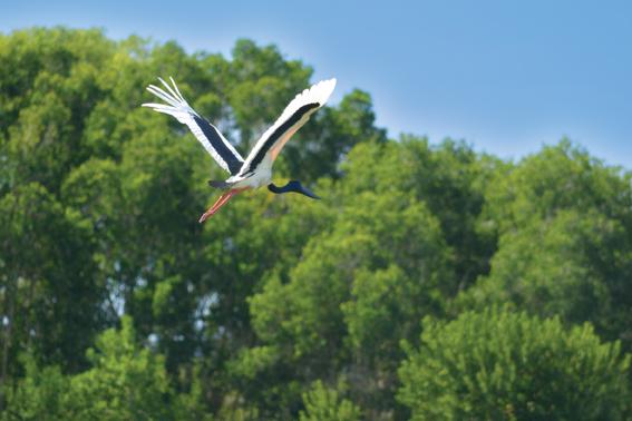野鳥の生息地でもあります