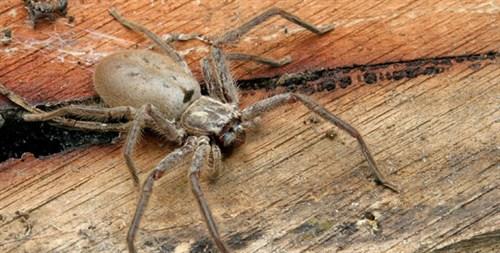 昆虫コーナーではクモの展示も