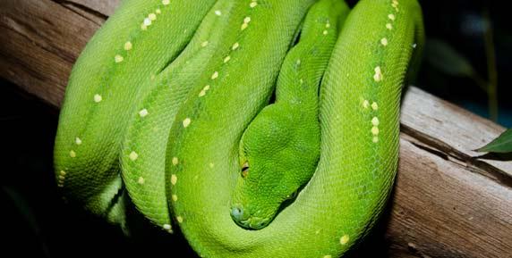 グリーンが鮮やかなヘビ