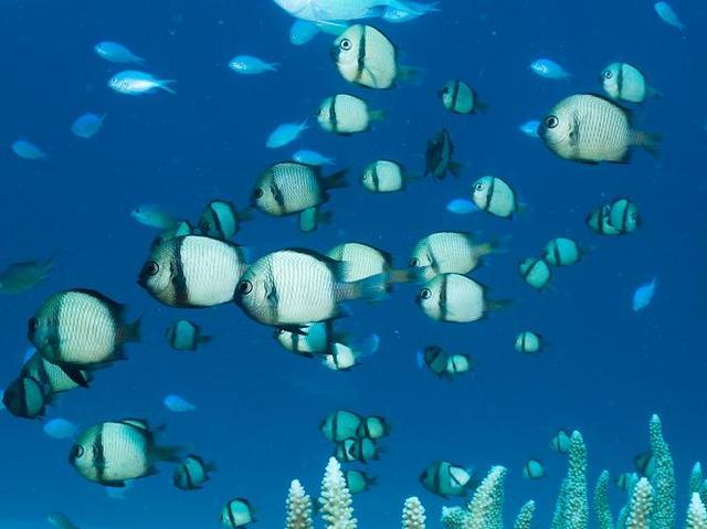 もちろん、熱帯の魚たちも。