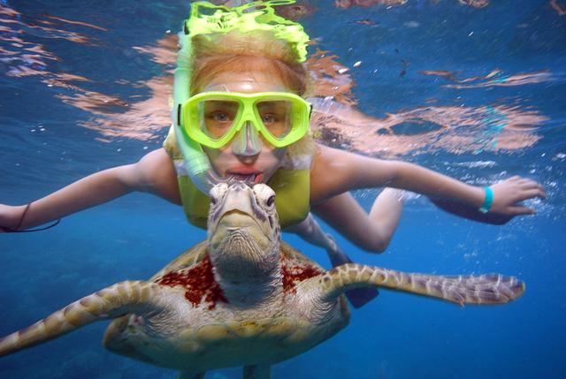 こんなに近くで海ガメと泳げちゃうかも!?