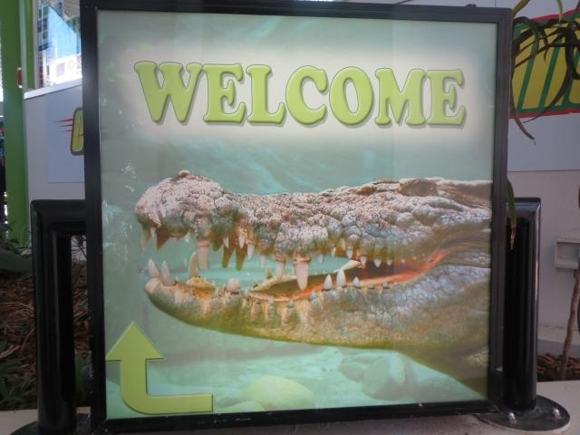 水槽の中の大きな入り江ワニを見られる、めずらしい展示方法です