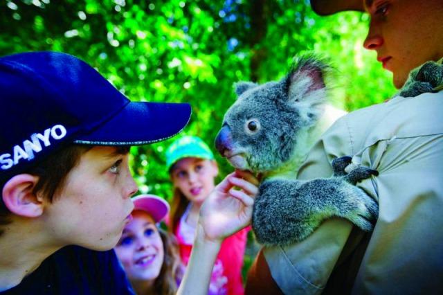 コアラ抱っこができる動物園です(別料金)
