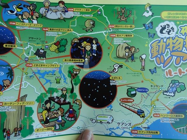 アサートン高原を動物を探してまわる大人気ツアー