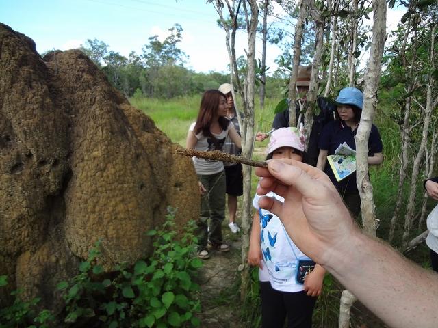 アリ塚のアリは、どんな味!?ツアーに参加して確かめて!