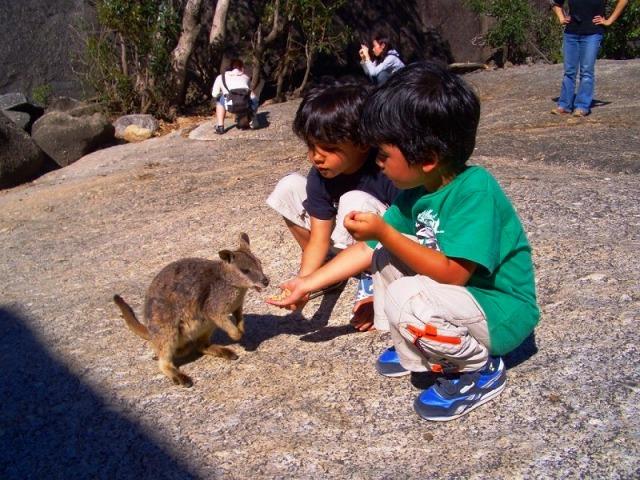 小さなワラビーなのでお子様も安全に餌付けできます