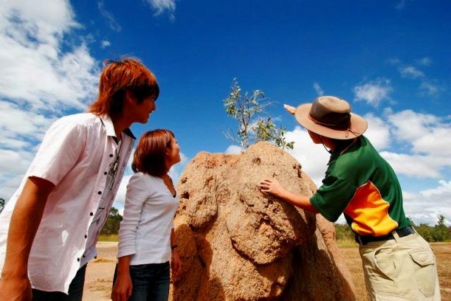 人の背丈ほどもありそうな大きなアリ塚を発見