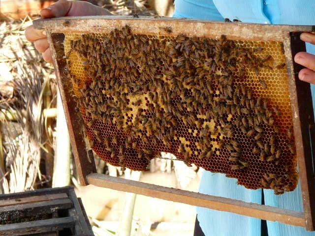 メコン川クルーズで訪れるハチミツ農園