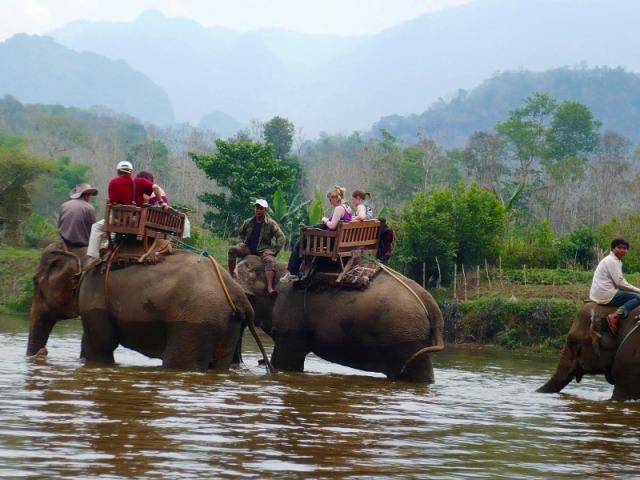 象に乗って川の中へ