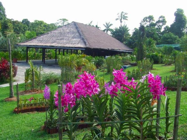 マンダイ地区蘭農園