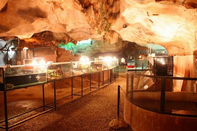 洞窟の中にはかめなどたくさん