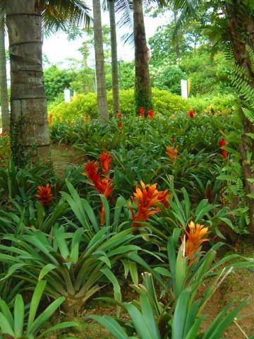 色鮮やかな南国の植物