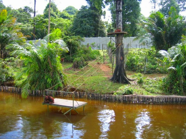 ジャングルに近い状態で飼育しているリハビリセンター