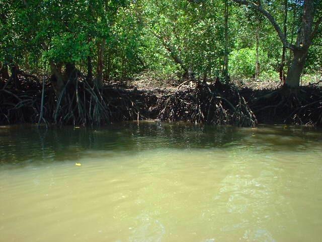 マングローブの森をクルージング