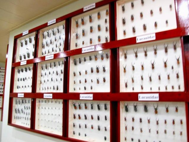ミニ昆虫博物館