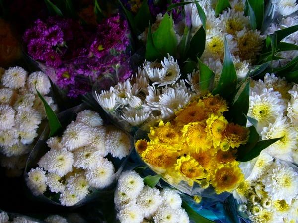 お花がたくさんのパーク・クローン市場