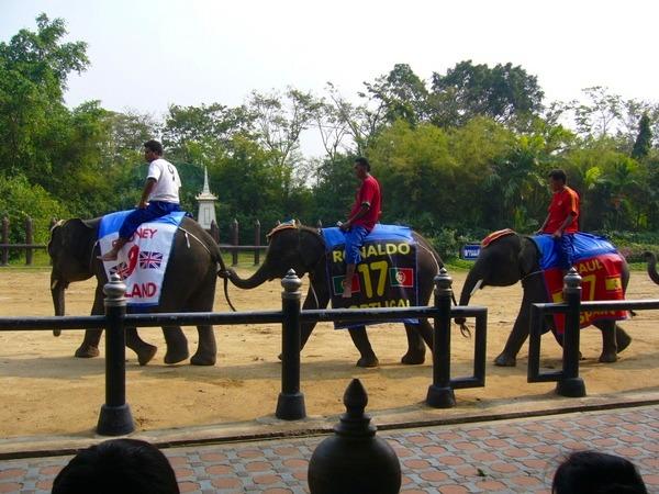 象とのPK合戦