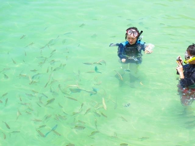 こんなにたくさんの魚たちが!
