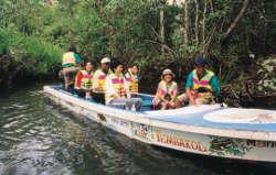 マングローブ樹林をモーターボートでクルーズ