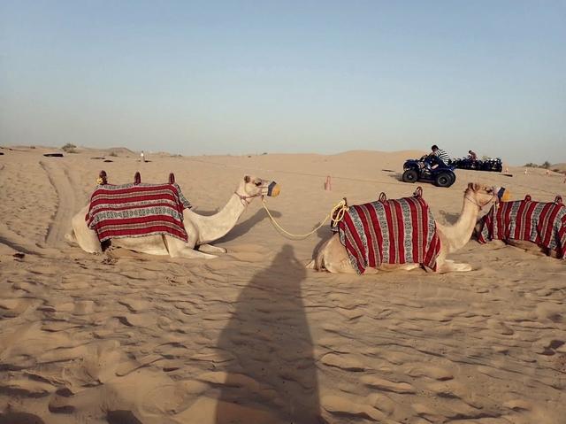 砂漠とラクダ
