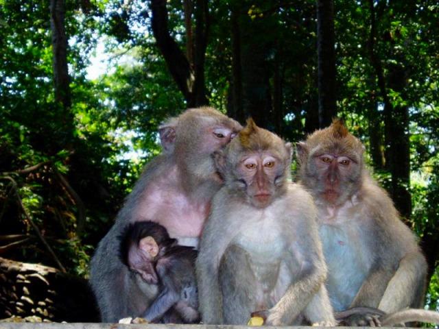 悪戯な猿たち