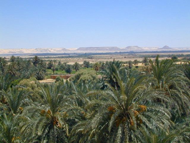 広大な砂漠