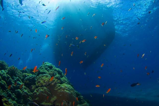 素晴らしい海の世界!
