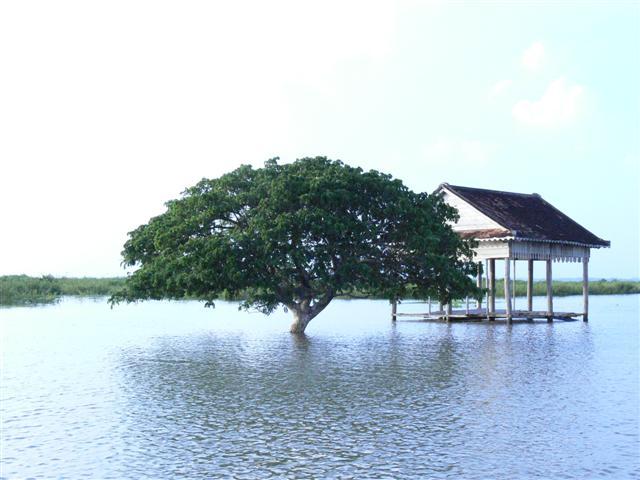 東南アジア最大の湖トンレサップ