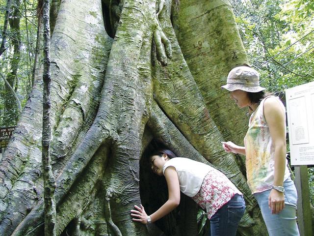 亜熱帯雨林散策