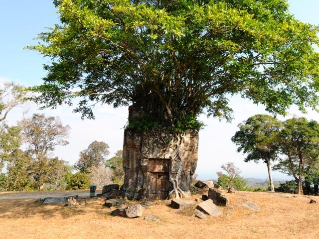 遺跡とともに、カンボジアの大自然も満喫