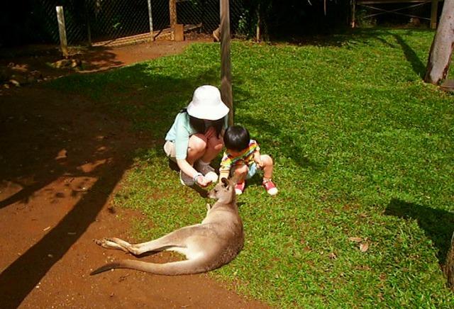 レインフォレステーション内の動物園(ワイルドライフパーク)