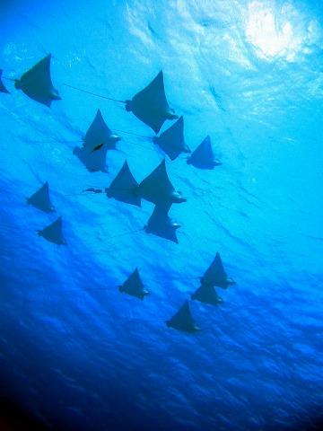 海の中は夢の世界