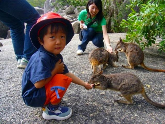 体が小さいロックワラビーは、お子様でも餌付けできます