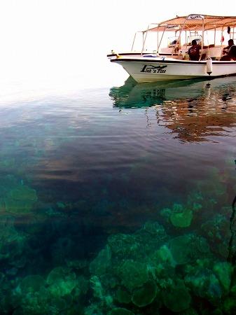 穏やかな日は海底が見えることも