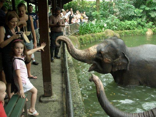 動物園へもお連れします(入園料別途)