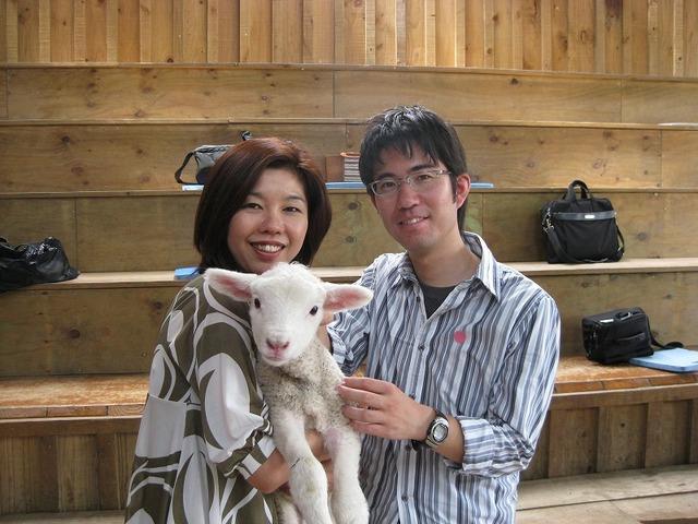 可愛い子羊