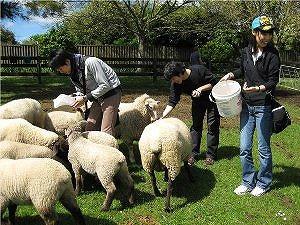 羊にえさをあげれるかも?