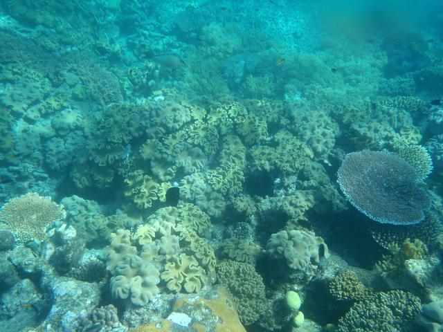 様々な色形の珊瑚はまるで海のお花畑
